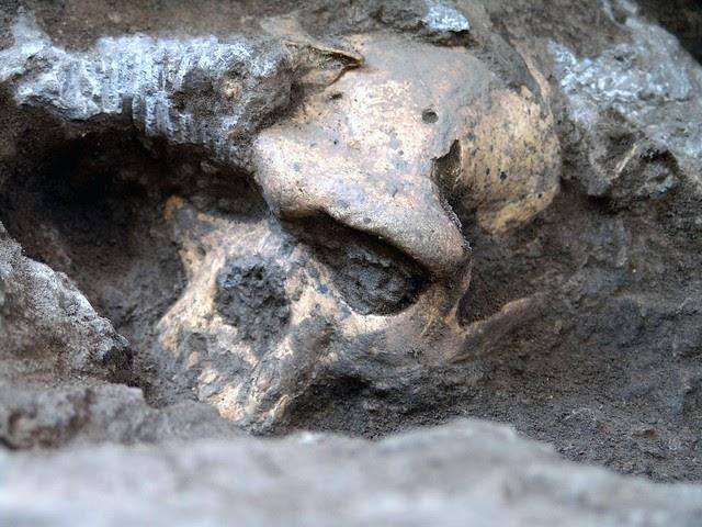 El cráneo que lo puede cambiar todo