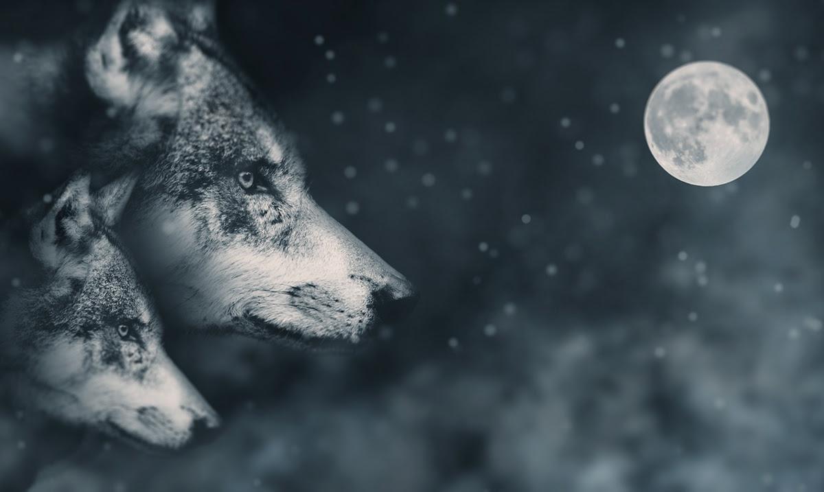 Библиотеку видеослотов betsoft gaming пополнил новый игровой автомат wolf moon rising теннис ставках тото
