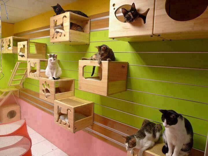 Kitty playpens