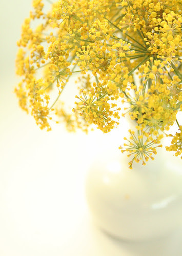 Fantastic Fennel in a vase