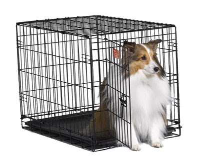 Midwest Dog Crates - Interview With Midwest Homes for Pets