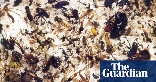 Plummeting insect numbers 'threaten collapse of nature' | Environment | The Guardian