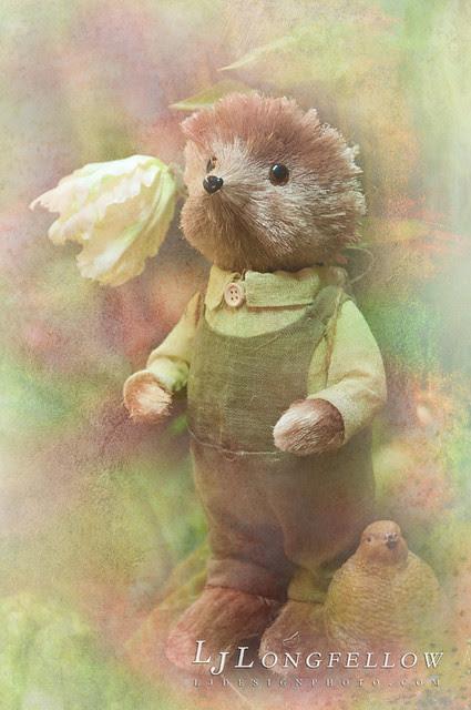 Hedgehog Dream 26/365
