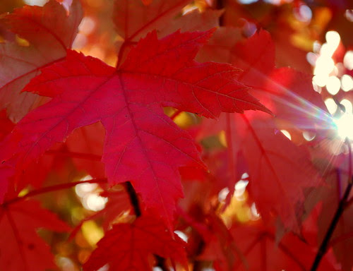 Lighted Leaf
