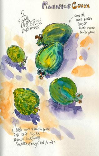 October 2012: Pineapple Guavas