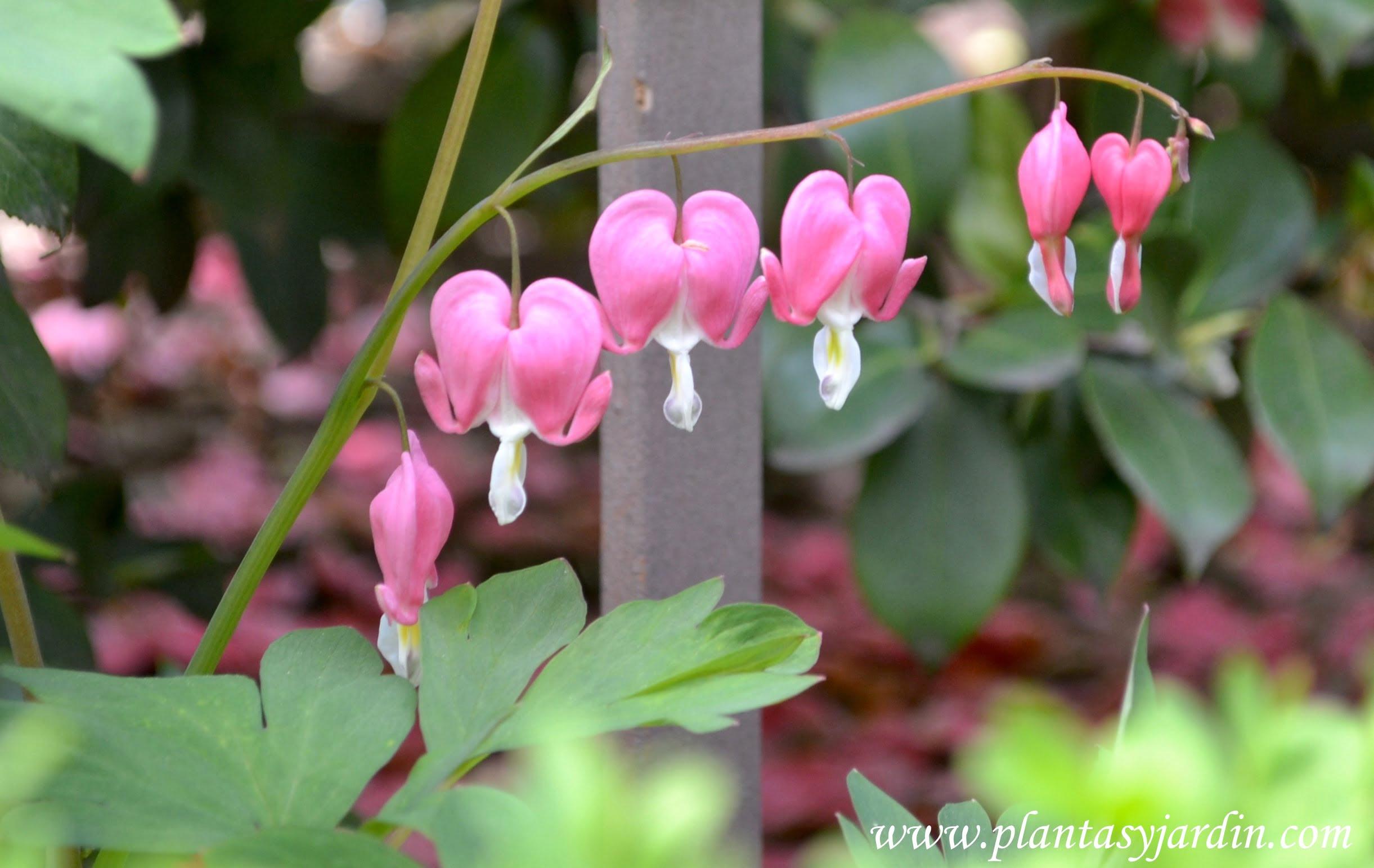 Flores Forma Corazón Plantas Y Jardín