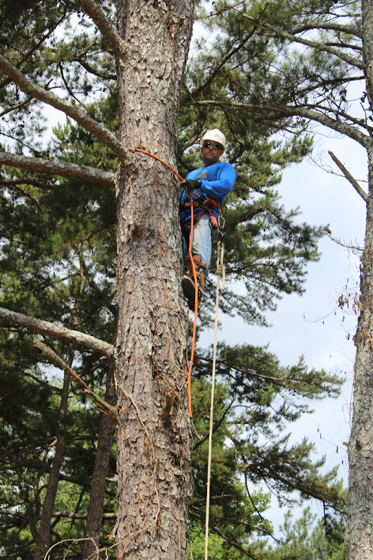 About | Lilburn Tree Services, Stump Grinding and Tree Trimming