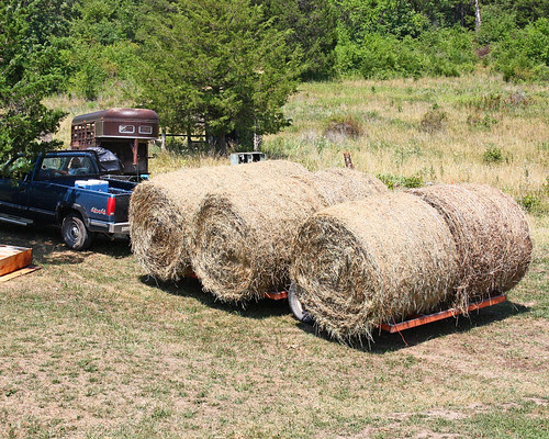 Bring Home the Hay!