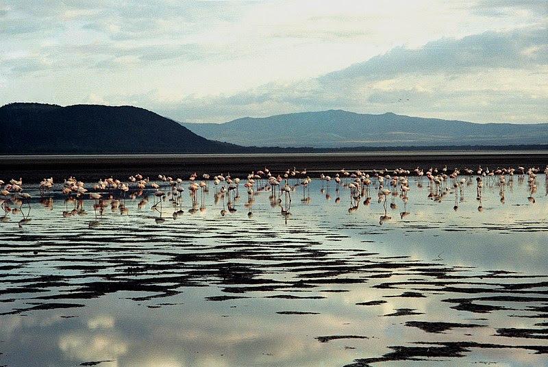 File:Flamingo 02(js).jpg