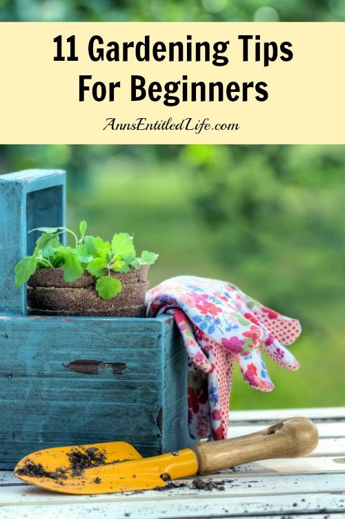 11 Gardening Tips For Beginners  - Just starting a brand new garden? Moved into an old house and looking to revitalize the old gardens there? Here are 11 Gardening Tips For Beginners to get you started.  http://www.annsentitledlife.com/produce/11-gardening-tips-for-beginners/