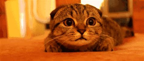 kumpulan gambar kucing bergerak lucu banget lucu pool