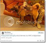 photo Militarycelebratesnationaldogday-6_zps98af8c6e.jpg