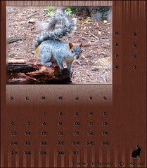 Zoo Calendar May