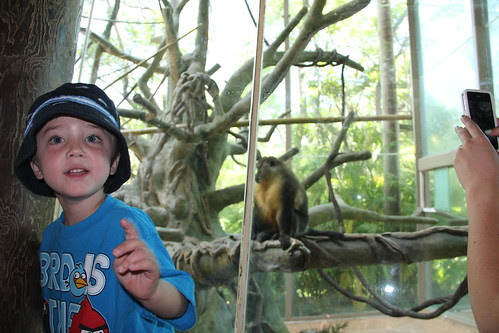 Olsen by the monkeys at the zoo