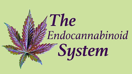 How to Stimulate and Support Your Endocannabinoid System