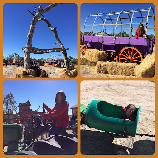 A fun fall day at Mile High Farms