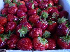 quebec strawberries
