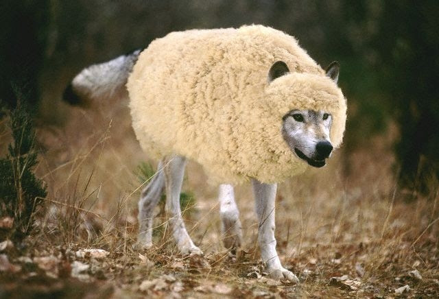A Wolf In Sheeps Clothing Tv Tropes