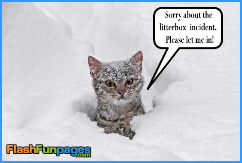 Funny Winter Pictures Ecards For Facebook