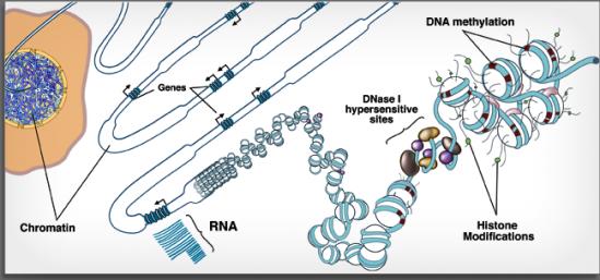 roadmapepigenomicsproject3