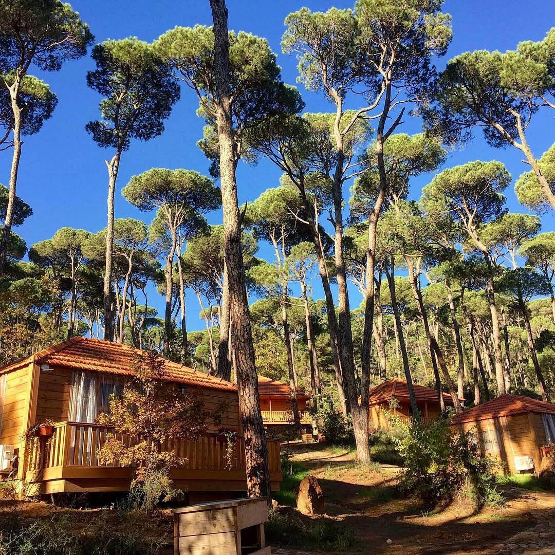 Good Morning Its A Beautiful Day Bkassine Mountainsoflebanon