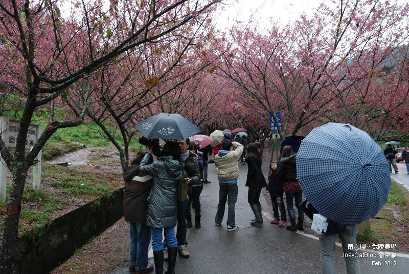 2012_0227_雨之櫻。武陵農場DSC_4259_00