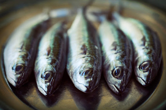 Sustainable aquaculture surfaces as a target for food investors