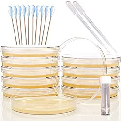 bacteria science kit for kids