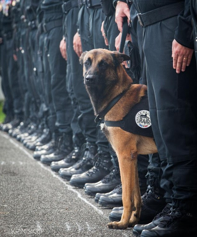 The Twitter profile for Police Nationale tweeted this image another police dog while paying tribute to Diesel