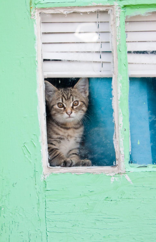 """mint green pet kitten door - """"Welcome"""" - 8 x 10 Photograph - HaynesHerWay"""