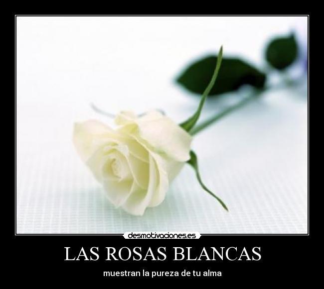 Rosas Blancas Con Frases Bonitas Imagui