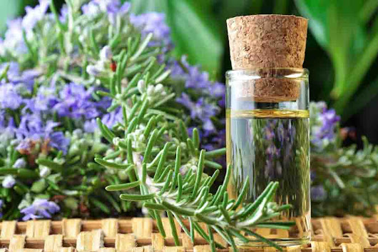 Rosemary essential oil shown to improve memory by 75 percent