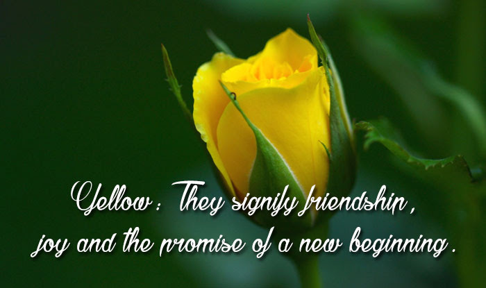 yellow rose friendship quotes க்கான பட முடிவு
