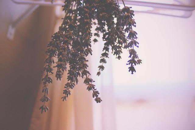 Lavender dear.