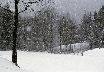 Image result for snowy woods