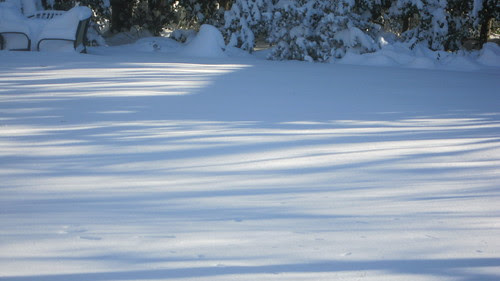 Shadows in the snow (02)
