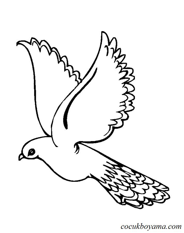 Best Of Güvercin Resmi Boyama On Bahattinteymuriom