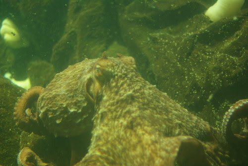 2009-08-26 Undersea Gardens (5)