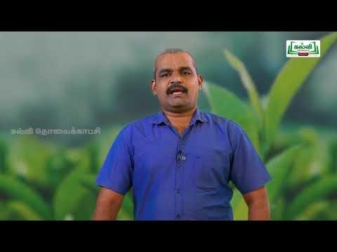 NEET  Botany Plant Morphology தாவர புற அமைப்பியல் Kalvi TV