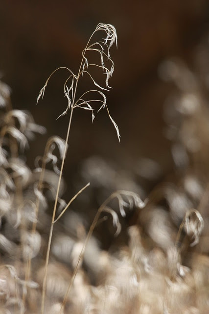 grass-above