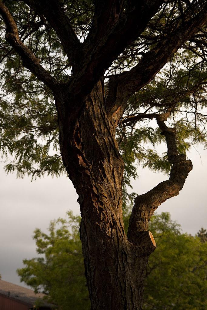 tree perspective2