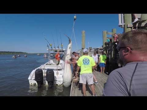 Shark Tournament Weigh In 2017 – Edisto Watersports and Tackle