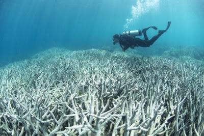 Corais embranquecidos na ilha Heron, Austrália. Foto: Richard Vevers/The Ocean Agency/Catlin Seaview Survey.