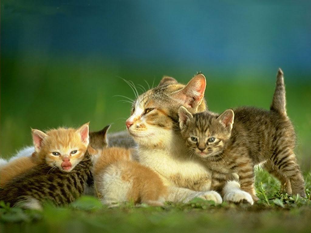 Unduh 100+  Gambar Kucing Hd Paling Lucu HD