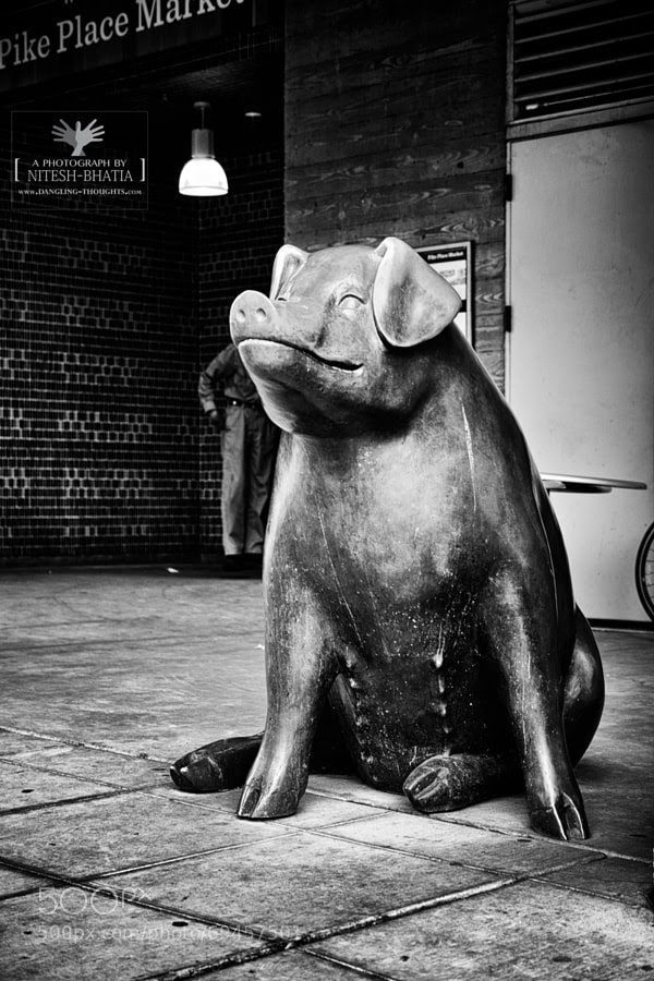 Photograph Rachel the Pig, Pike Place Market by Nitesh Bhatia on 500px
