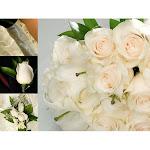 Samsclub.com Wedding Collection White (33 Pieces)
