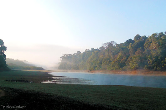 Periyar Tiger Reserve Nature Walk and Birding- Thekkady | PhotoValiant