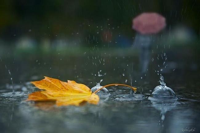 """Результат пошуку зображень за запитом """"дощ осінь"""""""
