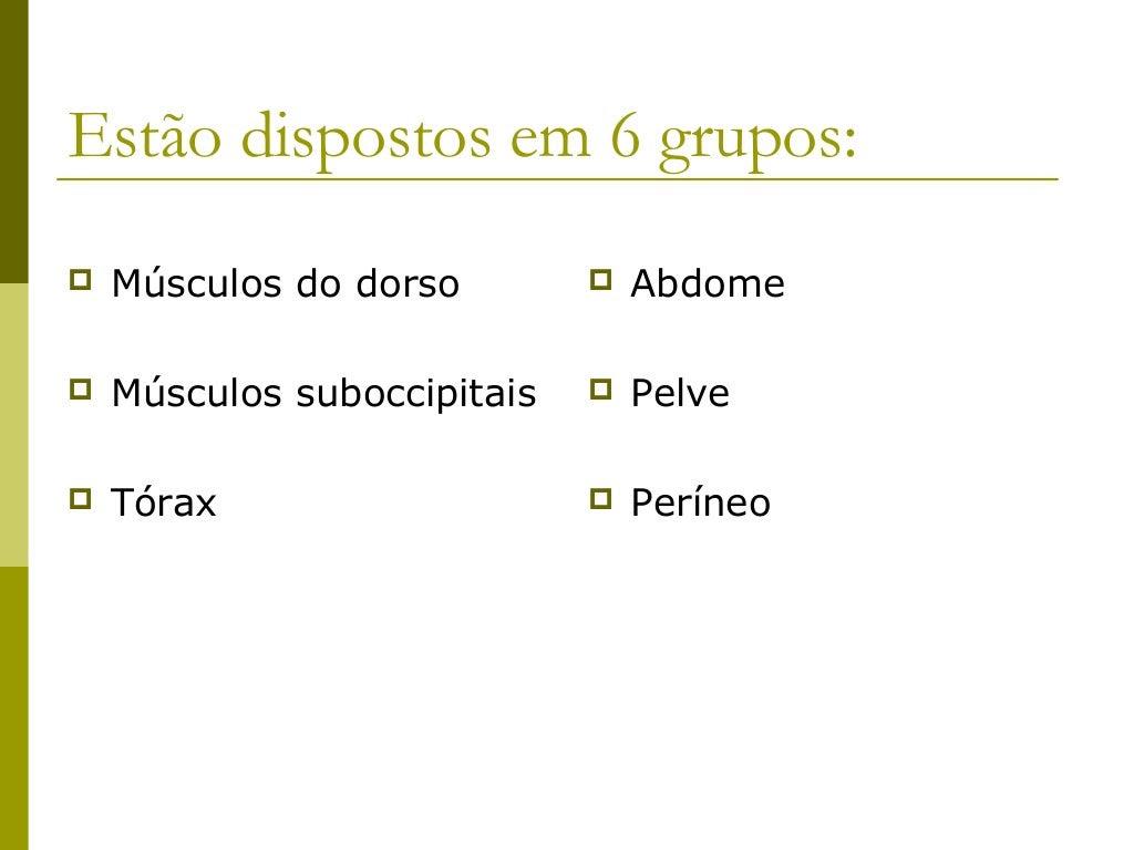 Estão dispostos em 6 grupos:   Músculos do dorso           Abdome   Músculos suboccipitais      Pelve   Tórax        ...