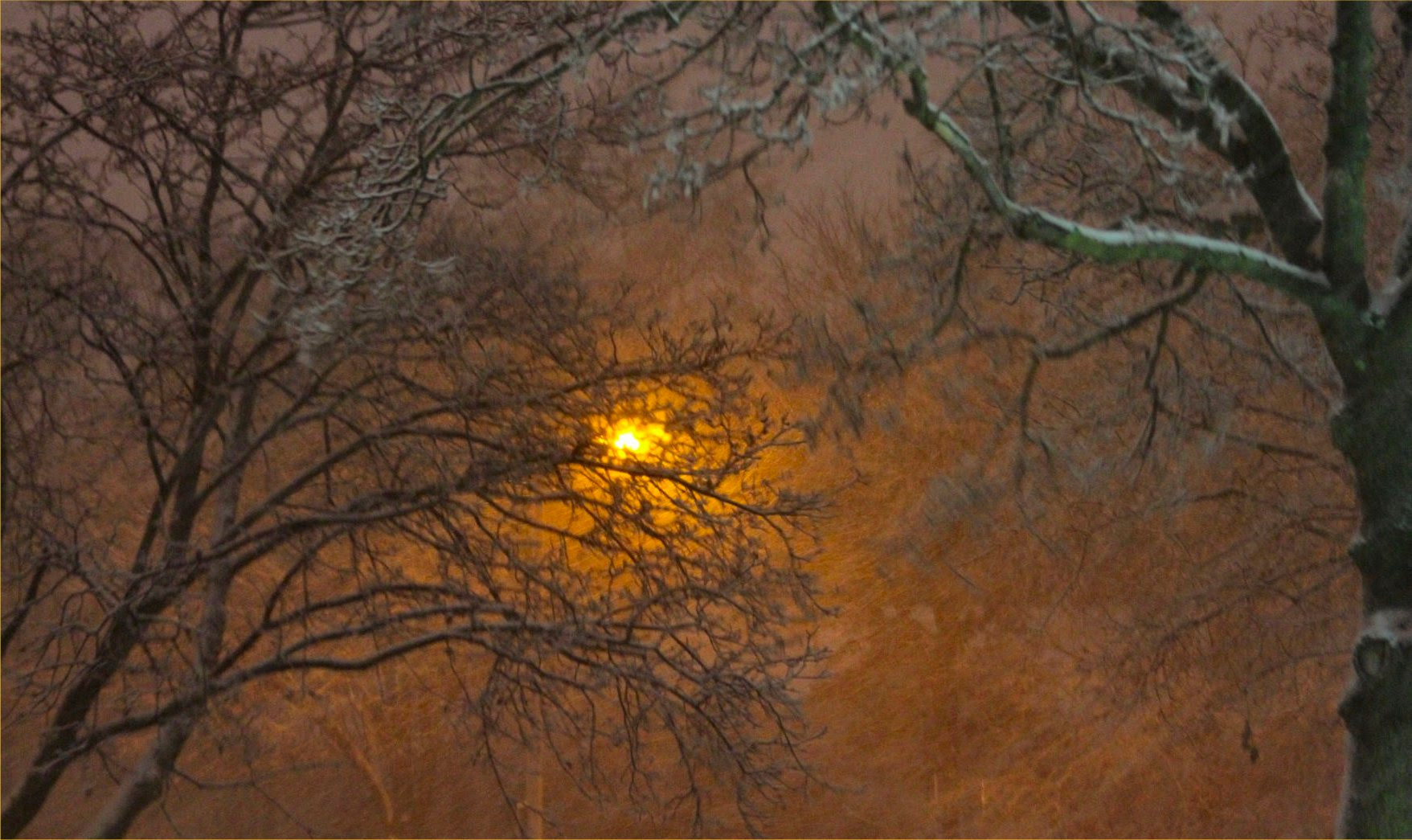 Wiconsin December 2009 Street Light and Trees Photo - soul-amp.com